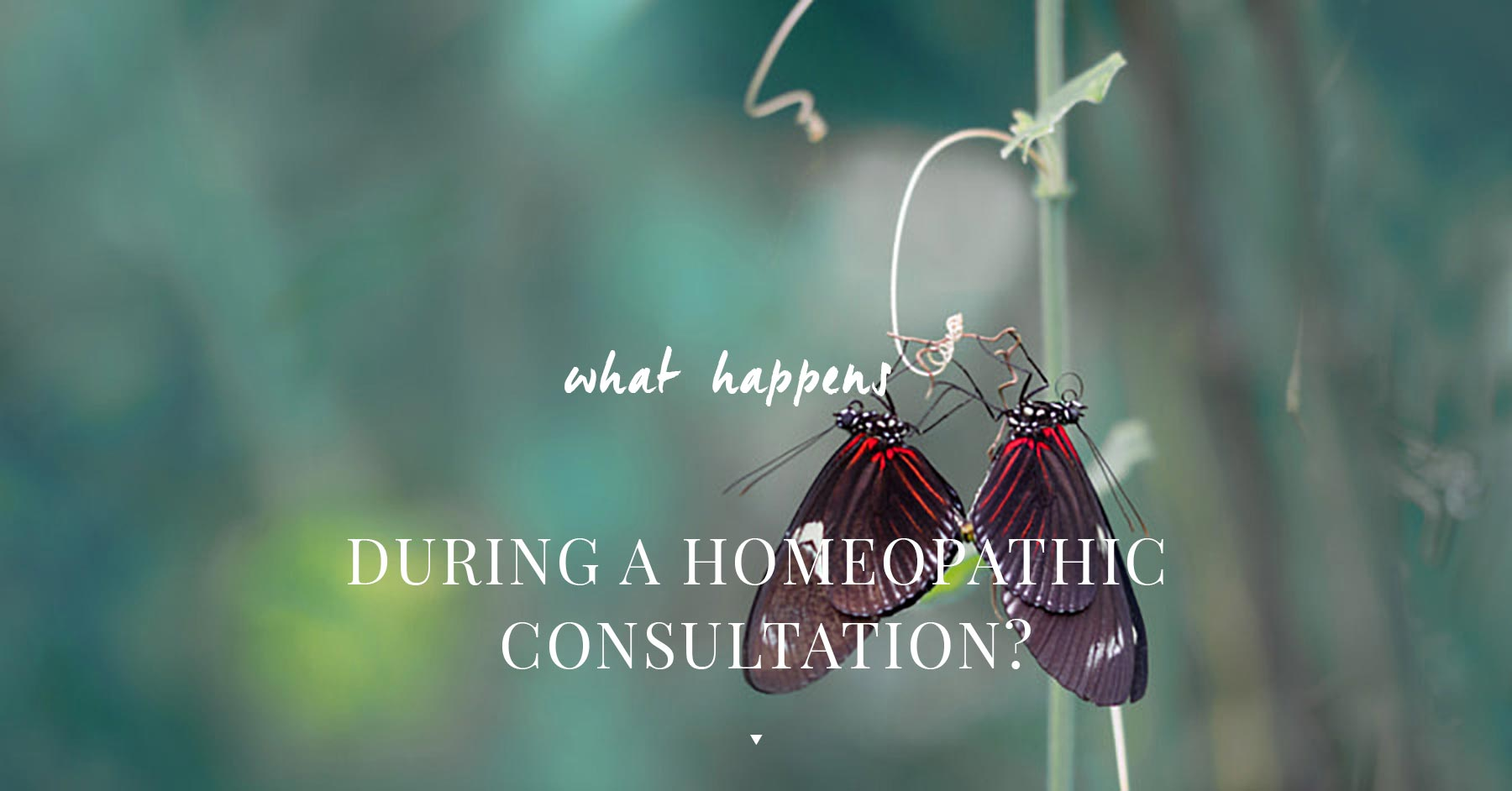 What Happens During a Homeopathic Consultation?